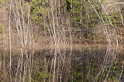 Reflection of birch trees in a small pond along the Kancamagus Highway (route 112) in the White Mountains, New Hampshire.