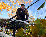 Mike Carca, of Manchester, works clearing a large tree limb that came down on the road in front of his home on Holl Street in Manchester, assisted by brother Edward and neighbor Ronald Brower, after the record breaking snow storm brought down trees and utility wires leaving more than 700, 000 CL+P customers in the dark, Sunday, October 30, 2011. (Jim Michaud/Journal Inquirer).