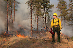 Prescribed fire in ponderosa pine forest on Sinlahekin Wildlife Area in northern Okanogan County.<br /> Unit:  Conner 5.  Seth Midkiff holding drip torch.