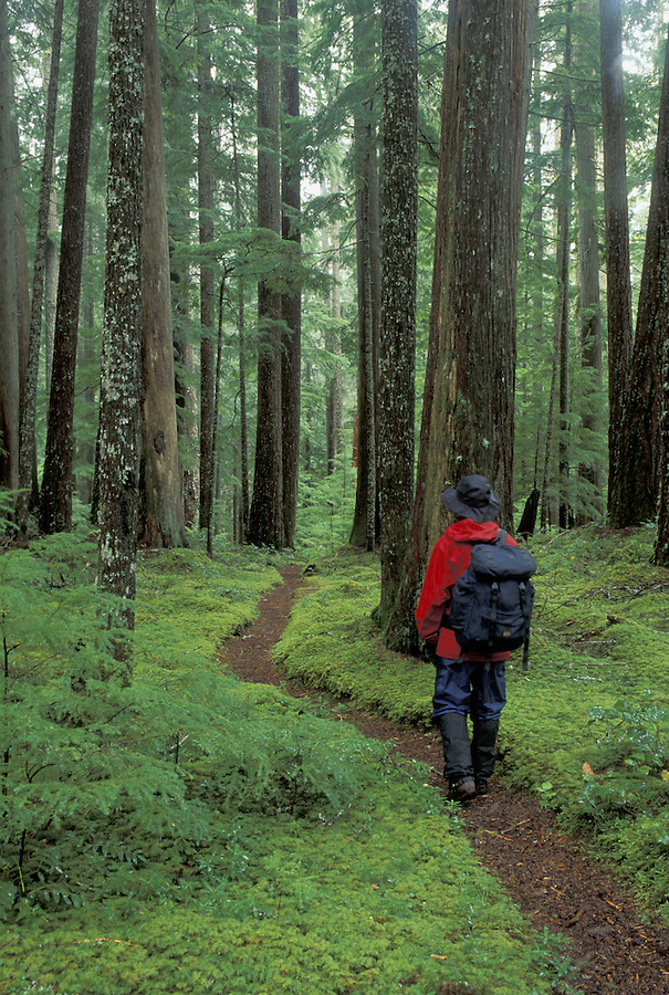 Woman hiking on trail through old growth forest, Washington