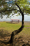 Table and tree on the beach of Lake Coeur d'Alene.