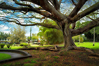 Liliuokalani Gardens in Hilo, Hawaii.