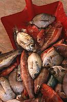 Europe/France/Provence-Alpes-Côte d'Azur/83/Var/Saint-Tropez: Marché aux poissons - Rougets