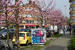 Brussels, Belgium -- April 14, 2018 -- Avenue de l'Université, blooming magnolias -- Photo: © HorstWagner.eu
