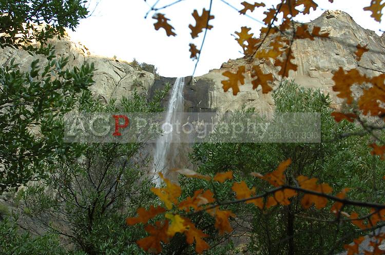 Bridalveil Falls is framed by Fall colors in Yosemite National Park in California November 22, 2008. (Photo Copyright Alan Greth)