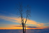 Cottonwood tree at sunrise<br />Anola<br />Manitoba<br />Canada
