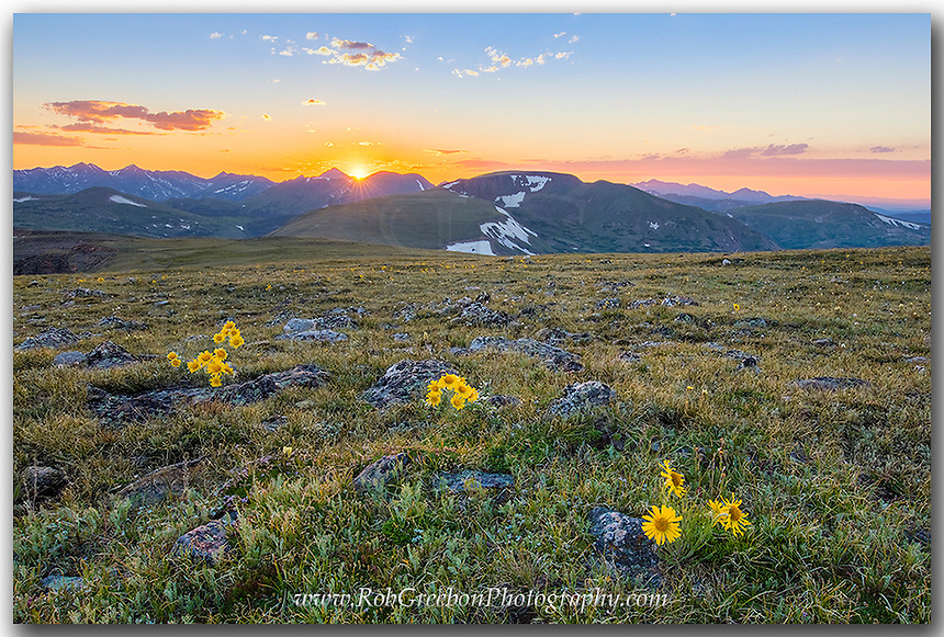 A smattering of Colorado wildflowers add color to the tundra in Rocky Mountain National Park. In the distance, the sun is setting over the peaks on a cold July evening at 12,000 feet in elevation.