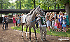 Flashy American before The Delaware Handicap (gr 1) at Delaware Park on 7/12/14