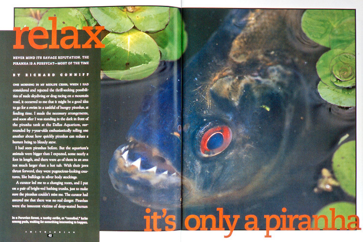 Magazine article about piranhas