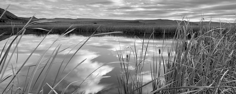 Pond with reflection and cattails. Summer Lake State Wildlife Refuge, Oregon