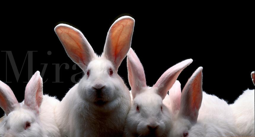White rabbits.