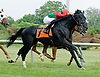 Mikoshi winning at Delaware Park on 6/9/12