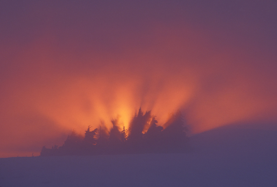 Trees silhouetted in foggy sunset, Table Mountain, North Cascade Mountains, Mount Baker National Recreation Area, Washington
