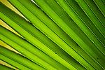 Leaf, Metropolitan Natural Park, Panama City, Panama
