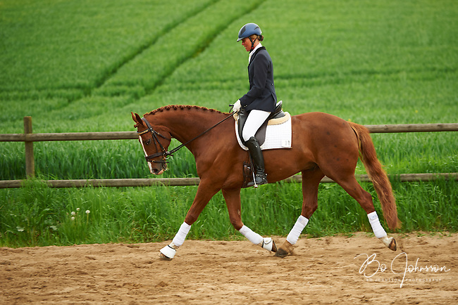 Helen Johansson warming up gelding Strano (Hejbols De Strano, e De Noir - Golfstrom II, f 2007, breeder Per Torp, owner Helen Johansson) for dressage competition Msv C:2 at Hasthagens Ryttareforening. <br /> The couple finished in 2nd place with their 64,333%.<br /> Billinge, Eslov, Sweden.<br /> Only for editorial use.
