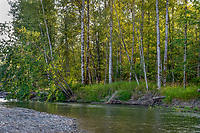 Nisqually River, WA.  July.