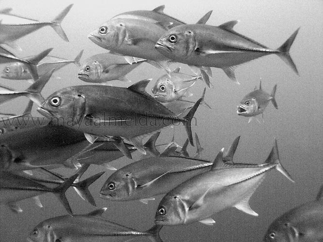 Fish-jacks