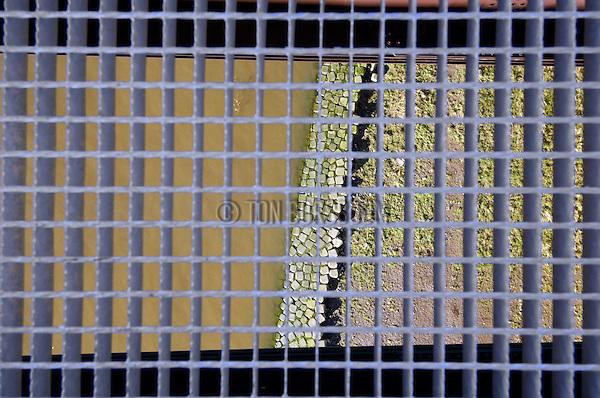 HAGESTEIJN - HAGESTEIN - Boven de Lek bij Hagestein plaatsen medewerkers van Den Hartog Montage in opdracht van Rijkswaterstaat nieuwe, stalen roosters tussen de twee brugdelen van de Hagesteinse brug. Het ontbreken hiervan kostte ruim een jaar geleden een man het leven toen deze tijdens een ongeval op de brug, hulp wilde bieden en over de middenberm sprong en in het water terecht kwam waar hij verdronk. Na het ongeluk, in november  2005, beloofde Rijkswaterstaat het euvel te verhelpen. Grote bouwhekken langs het werk maken het momenteel onmogelijk om nog in het water te vallen, zodat bij ongelukken het oversteken van de middenberm niet langer mogelijk is door hulpdiensten of betrokken automobilisten, zodat omrijden gewenst is. COPYRIGHT TON BORSBOOM
