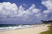 Salvador, Brazil. Sandy palm tree lined beach with people. Bahia State.