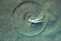 Windcirkel aan het strand
