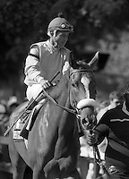 Hush Dear (Silent Screen), lovely stakes winner for the Whitney Stables, and the dam of Dear Birdie (Bird Town and Birdstone's mother).  Jacinto Vasquez up, 1983.