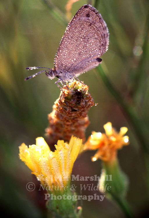 A pretty moth lands on a flower stem.
