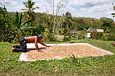 BELIZE, Punta Gorda, Village of San Pedro Colombia, Eladio Pop dries Cacao beans in the sun