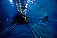 Giant saltwater shark tank at the New Jersey State Aquarium, Camden, Jew Jersey