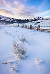 Yellowstone National Park, WY: Frosted sage and fenceline at the historic Lamar Buffalo Ranch in the Lamar Valley at sunrise
