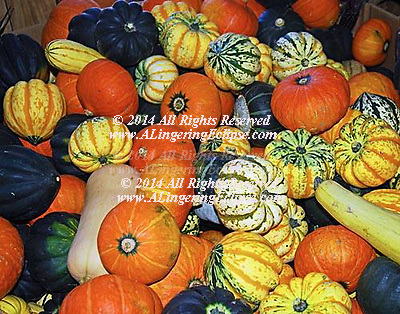 Ornamental Gourds and Pumpkins Fall Harvest