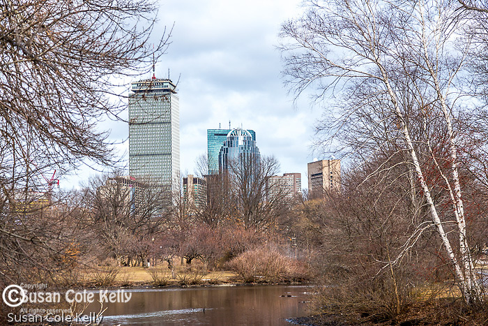The Prudential tower seen from the Fens, Boston, Massachusetts, USA