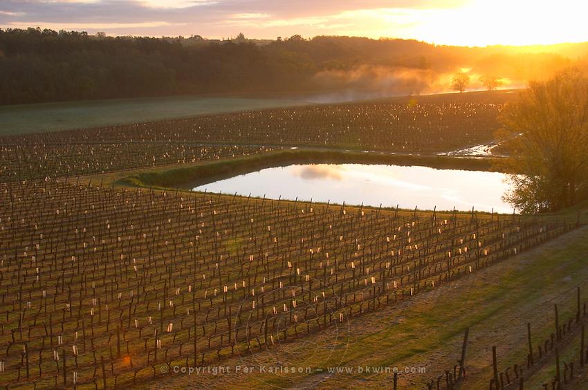 vineyard pond in early morning mist chateau pey la tour bordeaux france