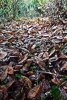 Basilicata 2010 - Bosco di castagno - Sentiero coperto di foglie.