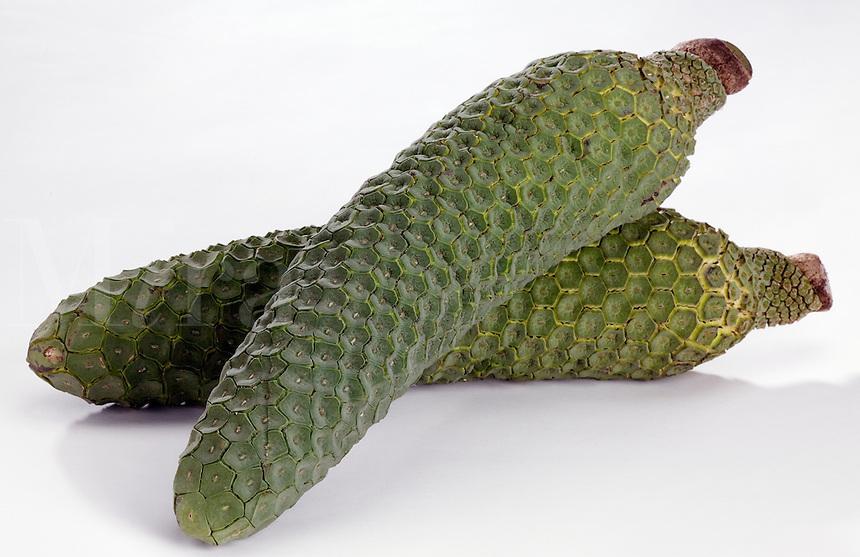 Monstera (Monstera Deliciosa) tropical fruit shaped like a banana. Monstera taste like a cross between banana and pineapple