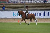 Hunter Pony NE 11hh