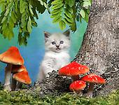 Xavier, ANIMALS, cats, photos+++++,SPCHCATS721,#a# Katzen, gatos