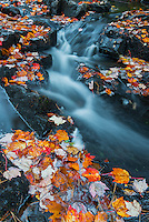 Duck Creek and fall foliage, Acadia National Park, Maine.