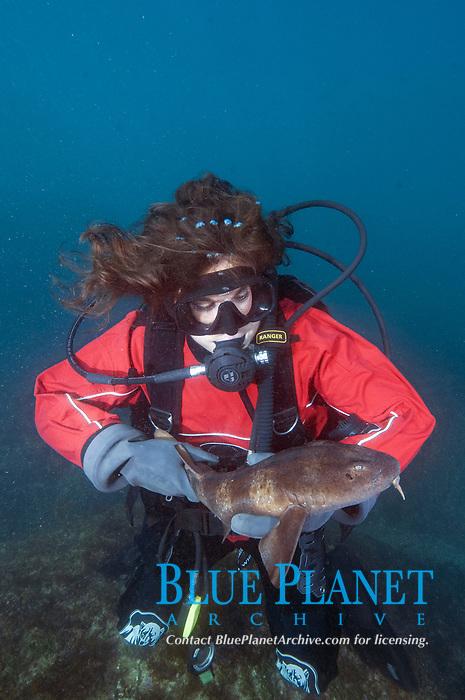 Diver holding a juvenile Blind Shark, Brachaelurus waddi. Green Island, South West Rocks, New South Wales, Australia.