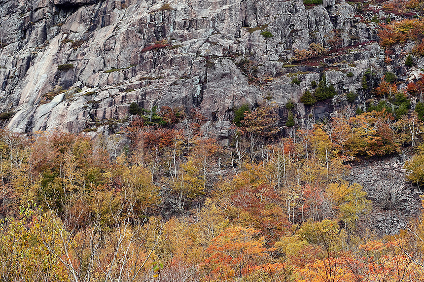 Wall of granite and autumn trees, Acadia National Park, Mount Desert Island, ME, Maine