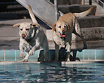 Gauge and Jazmine enjoy the second annual Pooch Plunge at the Carson City Aquatic Center in Carson City, Nev., on Saturday, Sept. 18, 2010..Photo by Cathleen Allison