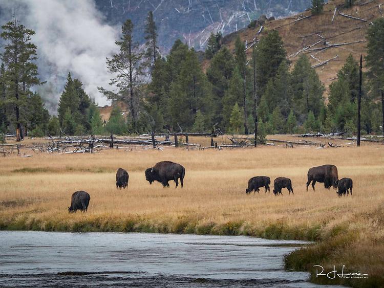 October 8 thru October 21, 2017 / Cross country Trip to Yellowstone National Park in Yellowstone, Wyoming.  Stops in Laramie, Jackson, Yellowstone with travels thru Pennsylvania, Ohio, Indiana, South Dakota, Wyomikng, Montana, Nothr Dakota, Missouri, Minnosota, and Illanois.