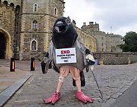JUL 01 PETA Calls On the Queen to Cut Ties With Pigeon Racing
