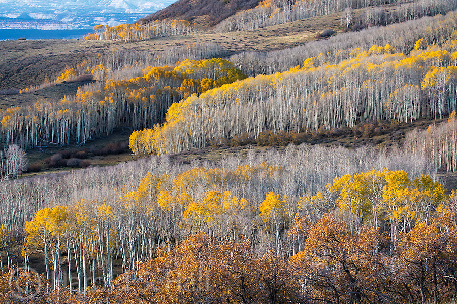 Late fall in the mountains near Torrey, Utah.  Layers in nature is a subject I strive to find when photographing.