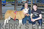 The Champion Ram at the Irish Texel Sheep Society show and sale in the Mid Kerry Mart on Friday evening the owner of the ram was Sheena McCarthy Buttevant, co Cork and the buyer was Adam Heffernan Killorglin who boughthim for ?500.