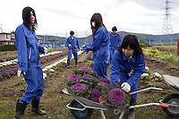 ISHIONAMAKI, JAPAN - DECEMBER 5: Student Wakayama Airi, age 17, (r) collects flowers in the garden of Kita High School supported by Save The Children Japan on December 5, 2011, in Ishionamaki, Japan. Save The Children Japan gives out scholarships to families and assists children who's lives were disrupted and devastated by tsunami. Many children lost parents, family members and where traumatized during the tsunami. Northeastern Japan's coastline was struck by an earthquake measuring 9.0 on the Richter scale and a Tsunami on March 11, 2011 which destroyed villages and livelihoods for hundreds of thousands of people. Almost 16,000 dead, thousands missing, more than 700,000 properties destroyed and an estimated 387,000 survivors lost their homes. Its estimated that it will take more than five years to rebuild. The cost is estimated to 309 billion U.S. dollars, the world's most expensive natural disaster. Many children suffered especially with school destroyed, education interrupted and the loss of family members took a heavy toll. Save The Children Japan runs many programs to assist families and children in the tsunami stricken areas. one of the few ngo's working here they assist with food, hygiene products, shelter, counseling, and many after school and pre school programs and scholarships for families who lost their livelihood after the tsunami. (Photo by Per-Anders Pettersson)