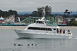 Velocity and california sea lions near the Beach Boardwalk