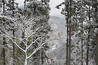 View from the cottage over the wooded mountainside covered in a dusting of snow