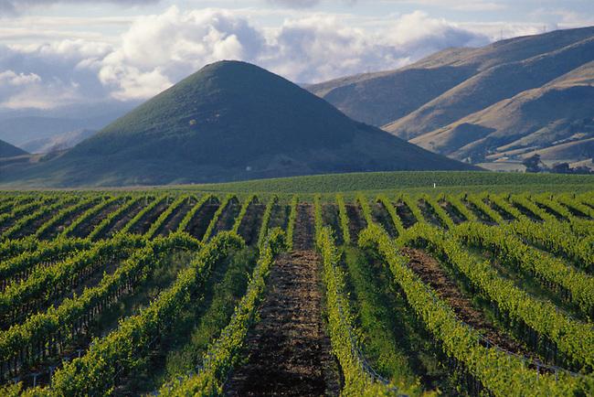 Edna Valley vineyard near San Luis Opispo