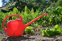 Red watering can in vegetable garden at summer