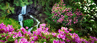 Rhododenrons and waterfall.  Crystal Springs Rhododendron Gardens, Oregon